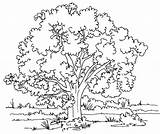Coloring Tree Pages Printable Trees Colouring Detailed sketch template
