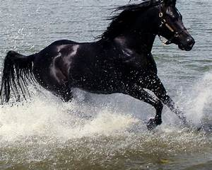 beautiful Black Stallion | Colors-Black | Pinterest ...