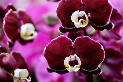what color is orchid orchid photos orchid colors