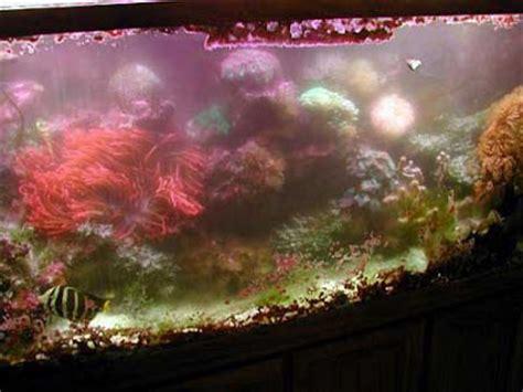 comment enlever les algues dans un aquarium nanozine contr 244 le des algues ind 233 sirables dans un aquarium r 233 cifal 1 232 re partie le magazine des
