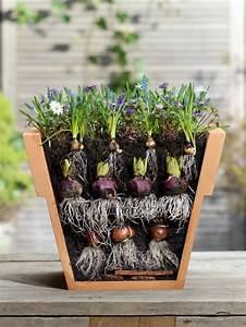 Tulpenzwiebeln Im Frühjahr Pflanzen : 10 tipps rund um blumenzwiebeln zwiebelblumen blumenzwiebeln blumenzwiebeln pflanzen und ~ A.2002-acura-tl-radio.info Haus und Dekorationen