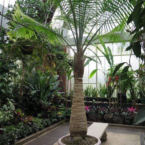 types  indoor palm plants  grow