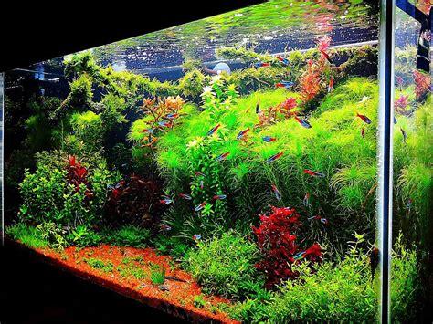 Fish Tank Aquascape Designs by Fish Tank Ideas Interior Design The Unique Of