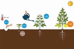 How To Grow Your Own Marijuana In Toronto