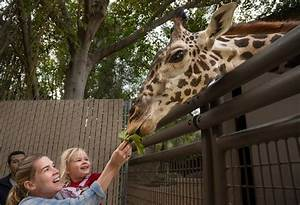 Giraffe feedings occur daily from 11 a.m. to 1 p.m. & 2 to ...