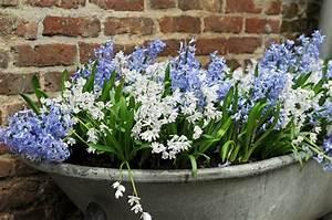 Tulpen Im Topf In Der Wohnung : fr hling im topf gartenzauber ~ Buech-reservation.com Haus und Dekorationen