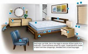 bed bugs information cover protect With can bed bugs survive the dryer