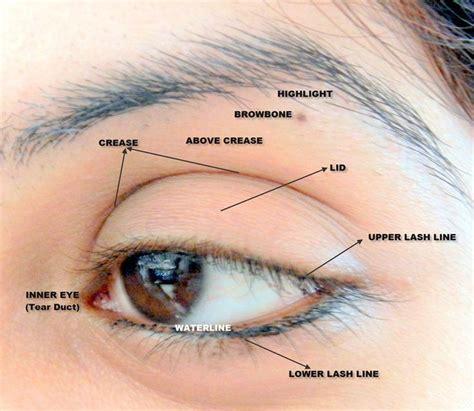 Diagram For Eye Makeup beginner makeup tutorial on beginner makeup