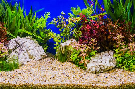 substrate for aquarium plants top 3 substrates to use in planted aquariums
