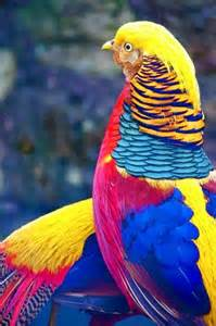 Amazing Animals Tropical Birds