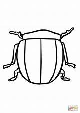 Potato Bug Coloring Beetle Colorado Pages Supercoloring Template Templates Categories sketch template
