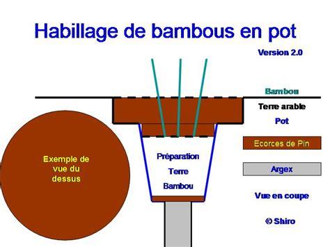 comment planter des bambous en pot de conception de maison