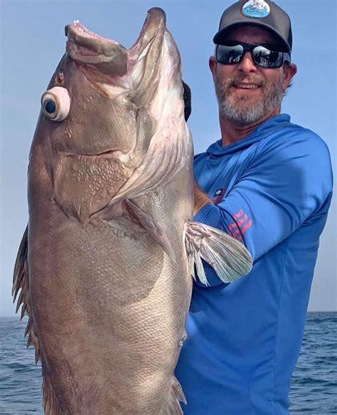 cocodrie offshore grouper louisiana should tuna sportsman inshore