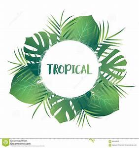 Tropical Palm Leaves. Vector Exotic Leaves. Tropic Card ...