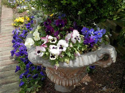pansies garden planter concrete  photo  pixabay