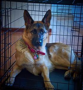 best crate for german shepherd dog or puppy reviews With dog crate size for german shepherd
