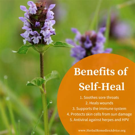 Best Herbal Remedies herbal Remedies Info