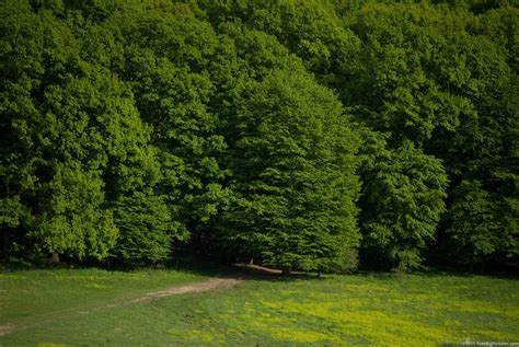Green Forest Picture by Green Forest