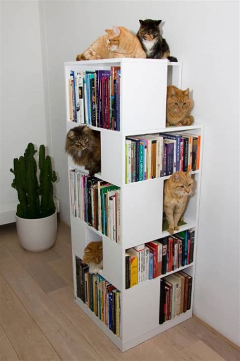 cat bookcase furniture ideal playground storage items