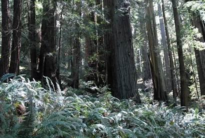 Endor Forest Moon Wars Wallpapersafari Jedi Return