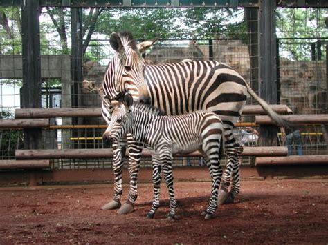 夢見 が 崎 動物園