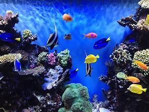 Underworld Aquarium Wallpaper #4240078, 3264x2448