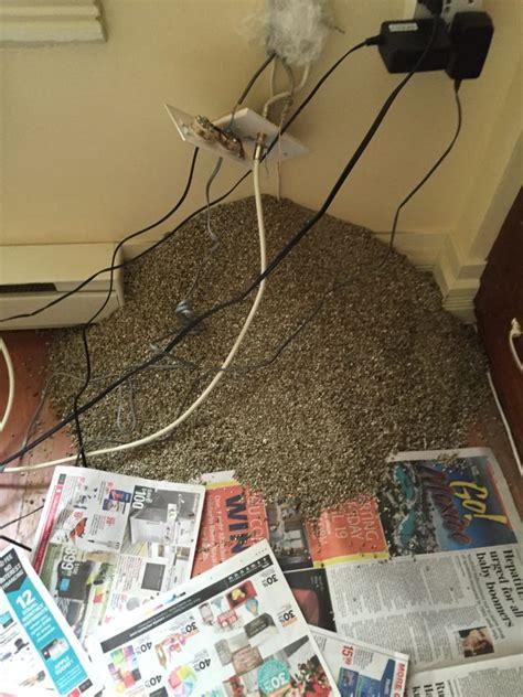 vermiculite attic insulation  asbestos