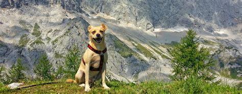 Urlaub Mit Hund Im Chiemgau  Unterkunft Mit Haustier Erlaubt