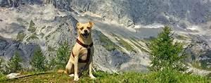 Urlaub Mit Hund Im Bayerischen Wald Unterkunft Mit