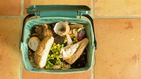 compost cuisine lawns are for suckers plant a garden for the climate