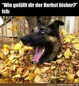 Bilder Herbst Kostenlos : funmail2u kostenlos jeden tag mit fun beliefert werden ~ Somuchworld.com Haus und Dekorationen