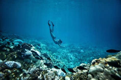snorkeling  scuba  hawaii island  hawaii
