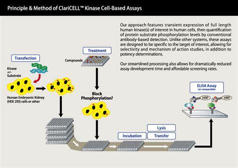 Carna Biosciences, Inc. - ClariCELL™ Kinase Cell-Based ...