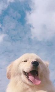 Free download Pin on Cute animals [540x960] for your ...