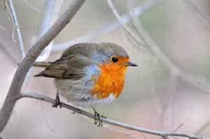 Kleine Vögel Im Garten : vogelfutter selbstgemacht und basteln von vogelfutter stellen ~ Lizthompson.info Haus und Dekorationen