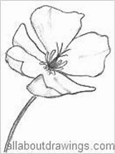 The gallery for --> California Poppy Line Drawing