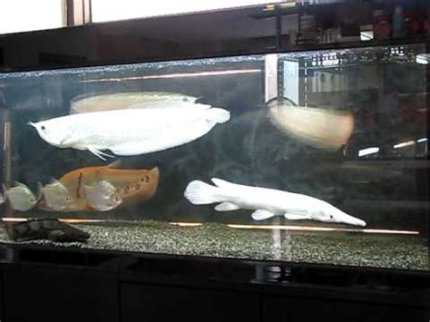 monster fish tank youtube