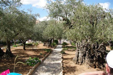 jardin des oliviers th 233 russe et petits points