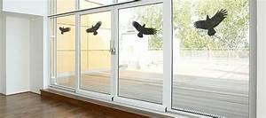 Was Tun Gegen Fliegen Unter Glasdach : vogel fliegt gegen fenster was kann man dagegen tun ~ Lizthompson.info Haus und Dekorationen