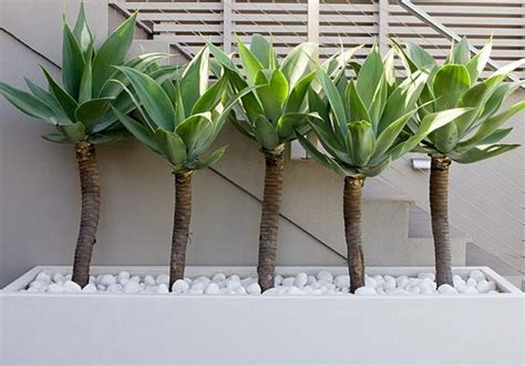 plants for a modern garden 2 small backyard ideas creating outdoor living spaces with style