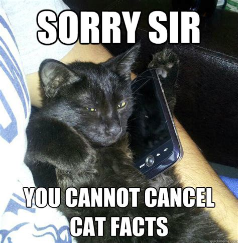 Cat Facts Meme - sorry sir you cannot cancel cat facts facts cat quickmeme