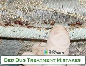 bed bug treatment mistakes bed bugs termites wildlife With bed bug beacon