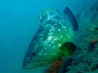 Fish Marine Fishes Species Different Bony Goatfish
