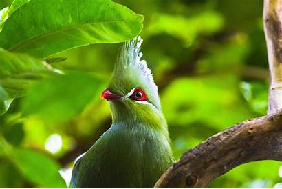 Birds Animals Desktop Wallpapers Backgrounds Mobile Wallup