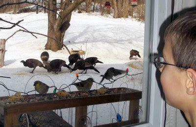 Cornell Great Backyard Bird Count by Will El Ni 241 O Affect Great Backyard Bird Count Cornell