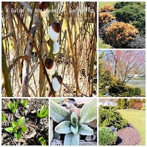 A Guide To Northeastern Gardening  March 2013