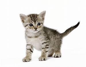 Site De Discussion : o trouver un leveur de chats wikichat ~ Medecine-chirurgie-esthetiques.com Avis de Voitures