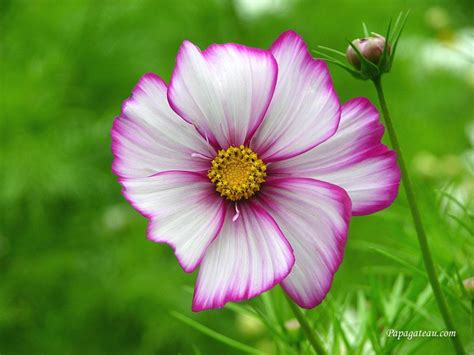 best flower pictures free funny pictures gallery free flower backgrounds free flower wallpaper
