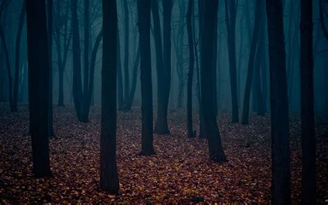 scary forest wallpaper  images