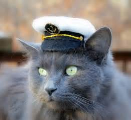 Cats Wearing Hats